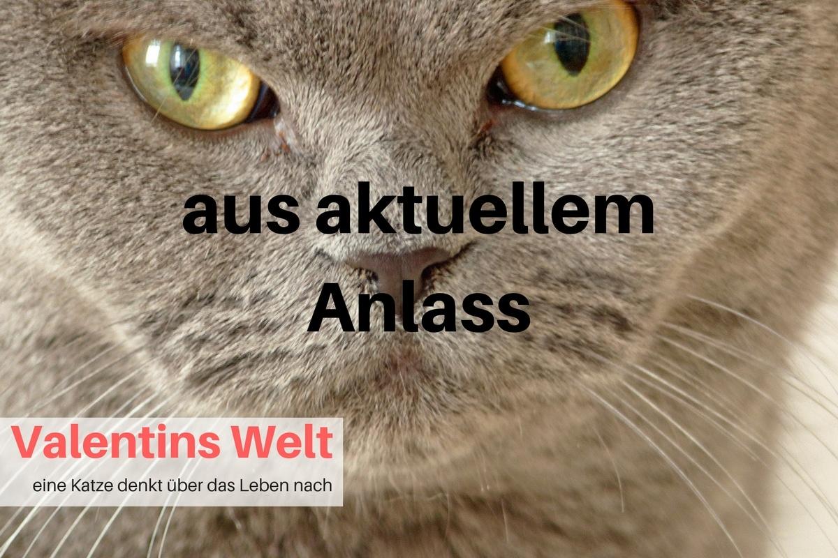 wenn eine Katze stirbt