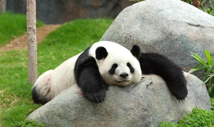 Bär schäft - Zeit für den Winterschlaf
